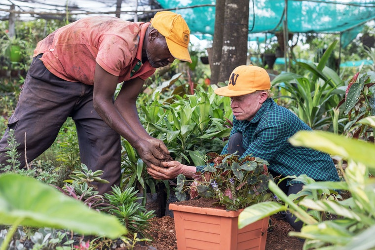 A man who has albinism works in a greenhouse with one of his employees to add dirt to a potted plant.