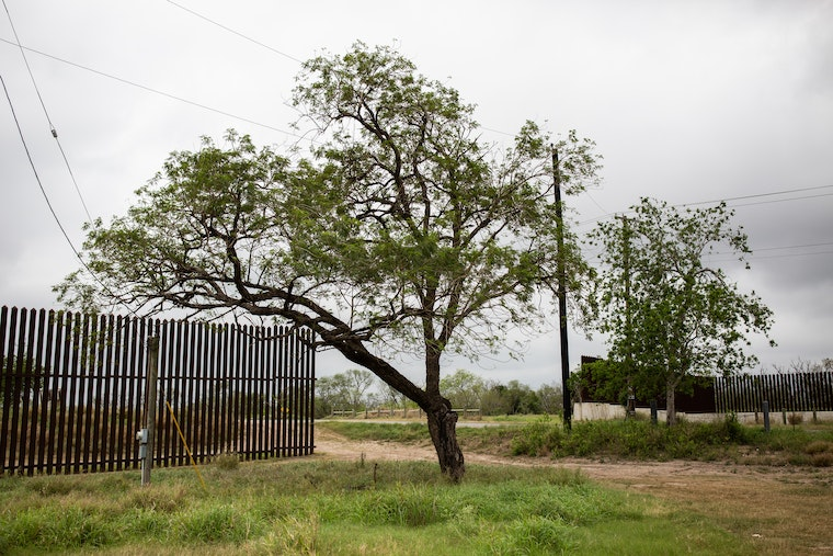 A tree next to a section of the border wall separating the United States and Mexico