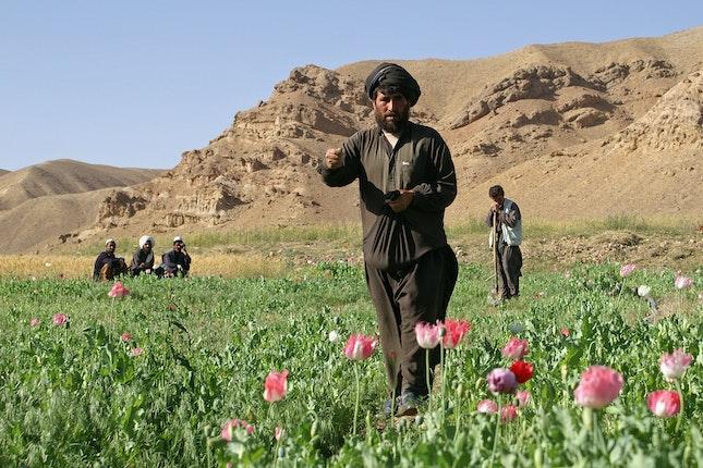 Men in a poppy field