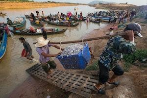 Two men carry a bushel of fish up a riverbank