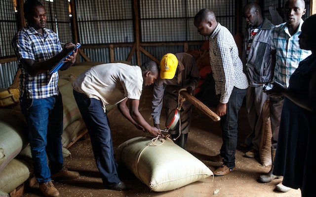 Men attach a scale to a sack of barley