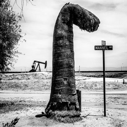 An oil pump and palm tree