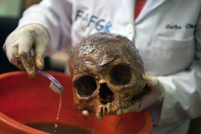 A lab technician cleaning a human skull